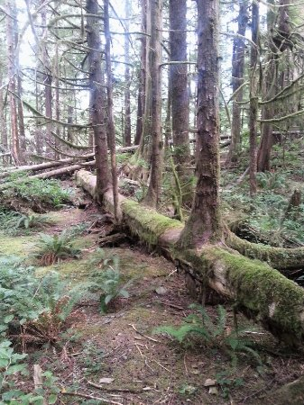 Port Renfrew照片