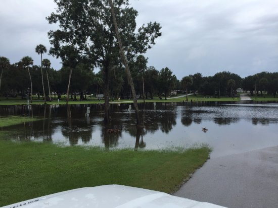 Wauchula, FL: Camp site flooding