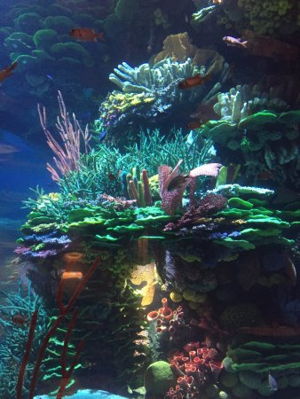 Aquarium Inside The Restaurant Picture Of Al Mahara