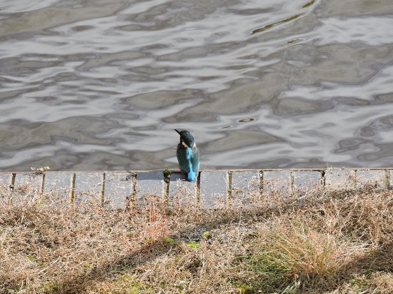 Northwich, UK: Kingfisher at the moorings near the lift