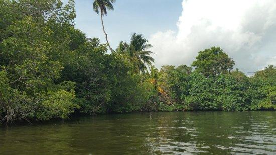 Bentota, Sri Lanka: cinnamon island