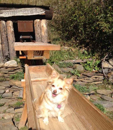 Horse Thief Campground and RV Resort: Even our dog had fun.
