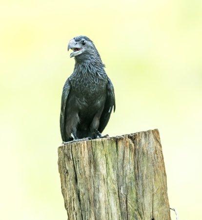 Cano Negro, Costa Rica: bird