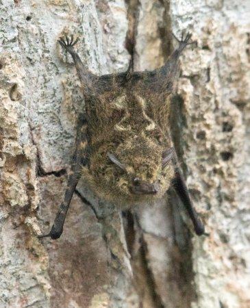 Cano Negro, Κόστα Ρίκα: bats
