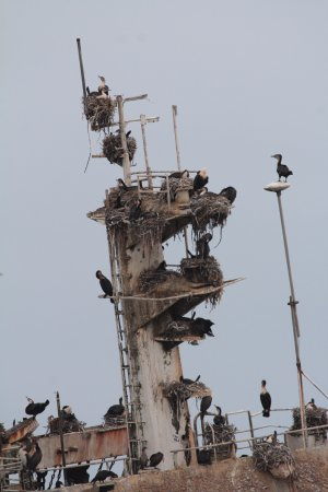 Hentiesbaai, Namibia: Zeila Shipwreck has become a bird nesting community