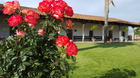 Soledad, Californien: Beautiful Flowers Throughout