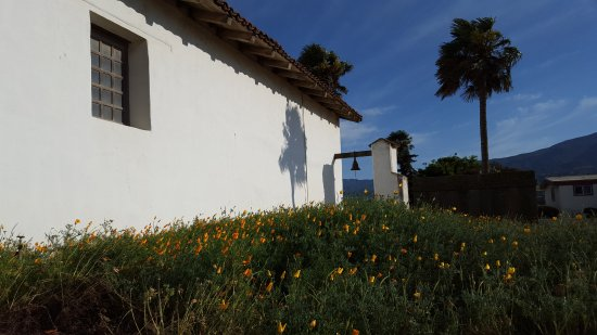 Soledad, CA: Poppies