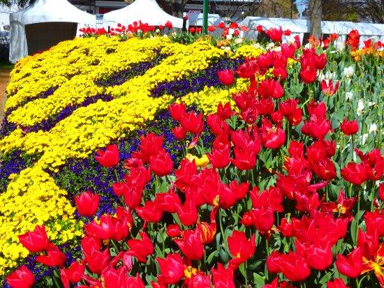 Bowral, Austrália: Tulips and more Tulips