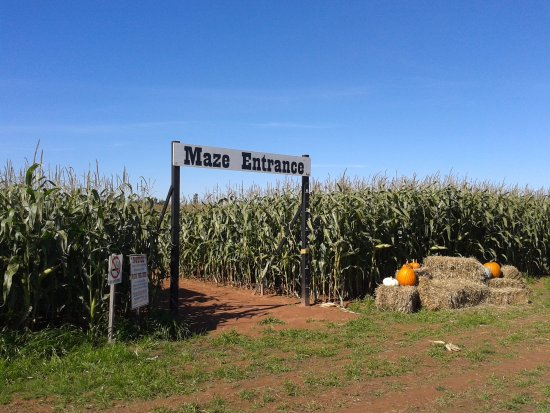 The Chuckwagon Farm Market & Belfast Corn Maze