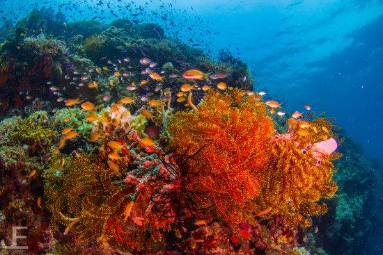 Tawala, Filipina: Coral and feather stars of all colors imaginable.