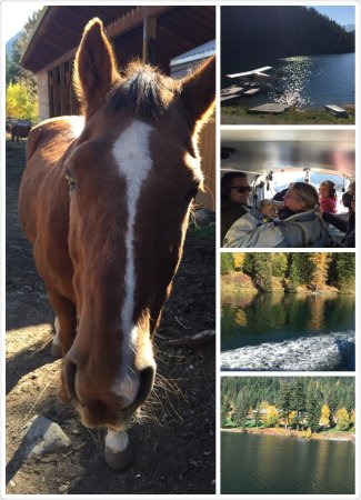 Tyax Wilderness Resort & Spa: Tyax.  Where you can meet Mr Ed and enjoy the beauty of the area, hospitality, great wines and a