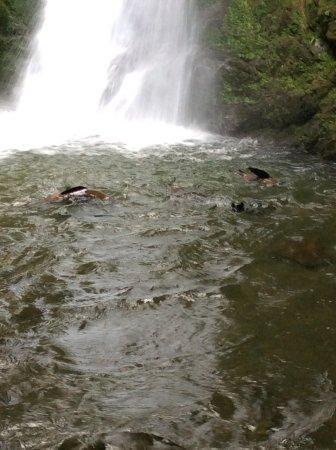 Kaikoura, Nueva Zelanda: Seal pups at the falls.