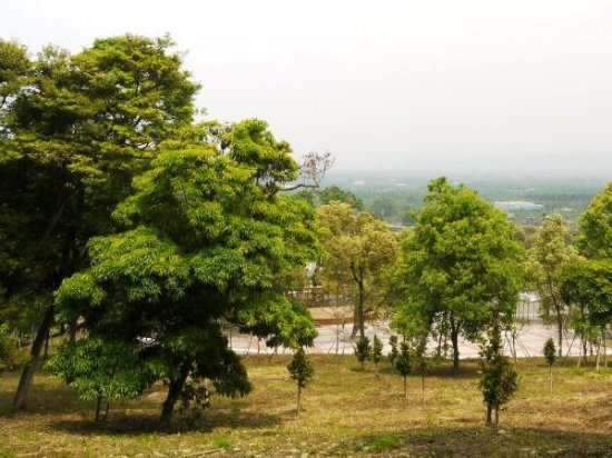 古坑乡荷苞桐花公园