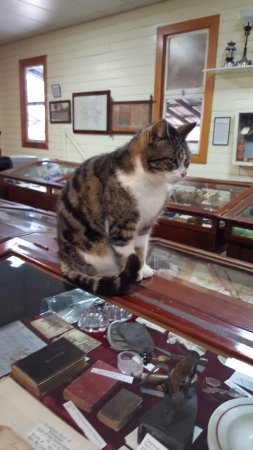Miles, Australië: Very friendly cat in the museum - my son loved it!