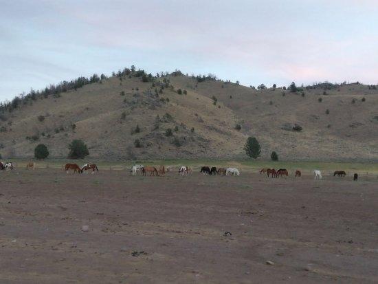 Bitterroot Ranch : IMG_20160820_201412_large.jpg