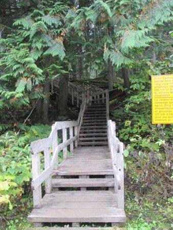 Giant Cedars Boardwalk Trail: Fotos vom Rundgang