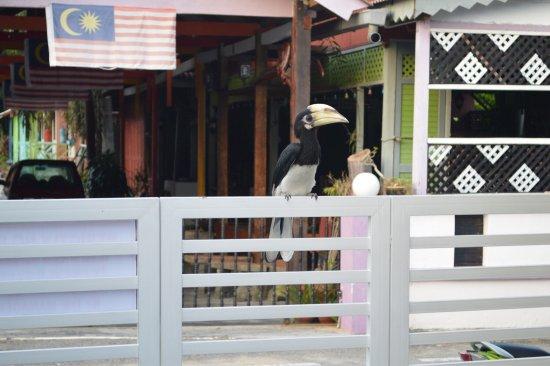 Nipah Guesthouse: photo1.jpg