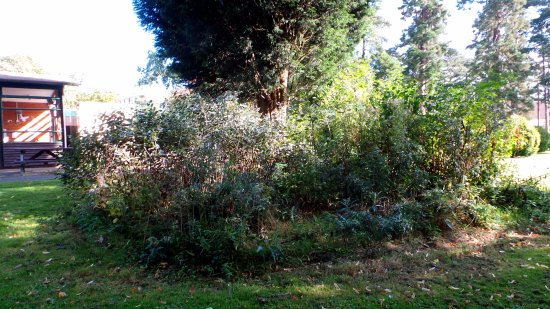 how to kill brambles and nettles