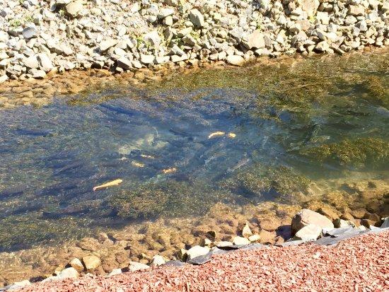 Elk Springs Resort: photo2.jpg
