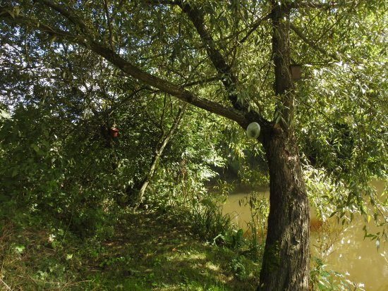 """Axminster, UK: """"Kingfisher View Point """"a secret location on our stretch of the river."""