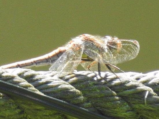 Axminster, UK: Just having some sun bathing in the river garden