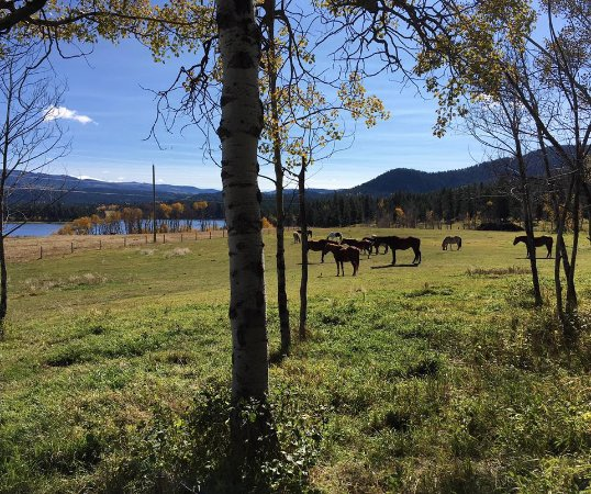 Kamloops, Canada: after a long day on the trails the horses have a rest in the front field