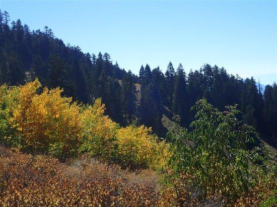 Mount Ashland Foto