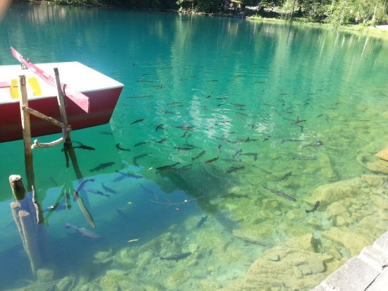 Blausee-Mitholz, Schweiz: 20130812_102806_large.jpg