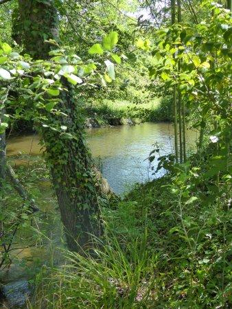 Metairie Montplaisir: L'Orbiel au fond du parc