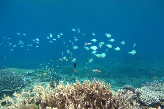 Quirimbas Archipelago, Mosambik: Immersione