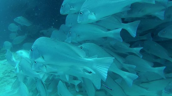Quirimbas Archipelago, โมซัมบิก: Pesci