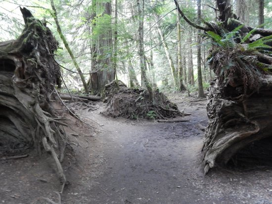 Port Alberni, Kanada: Path between tree roots