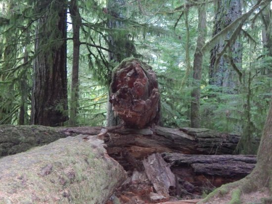 Port Alberni, Canadá: Forest floor