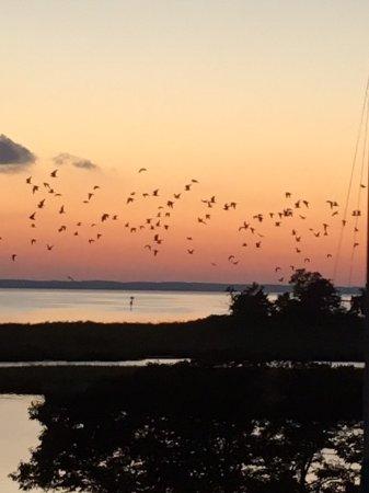 Tilghman, MD: Birds in flight at sunset