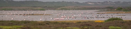 Velddrif, South Africa: There are plenty of birds on the pan!