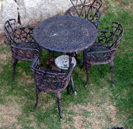 Hotel Arce: Debajo de la mesa del jardín trasero, al atardecer, había dos conejos pequeños que viven en el m