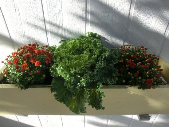 Rockport, ME: die liebevoll gefüllten Blumenkästchen unseres Bungalows