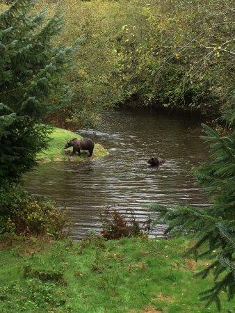 Grizzly Bear Lodge & Safari Photo