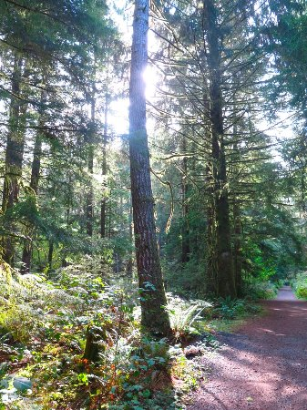 Campbell River, Canada: Sunlit trail
