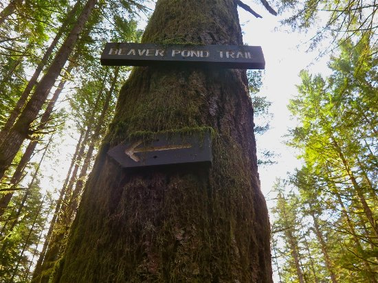 Campbell River, Canada: Beaver Pond that way...