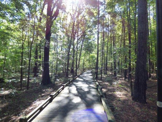 Cayce, Carolina del Sur: trail