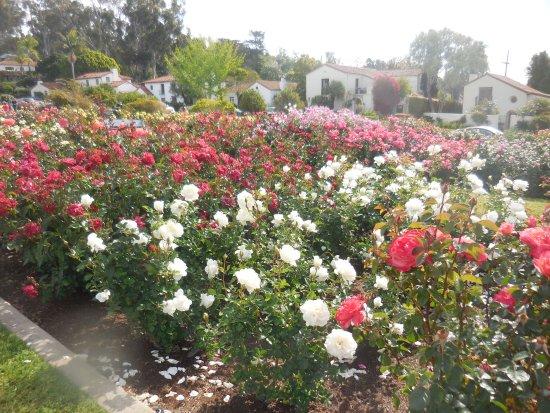 Alquiler de vacaciones cerca de la Misión de Santa Bárbara | Jardines de la Misión | Perfil