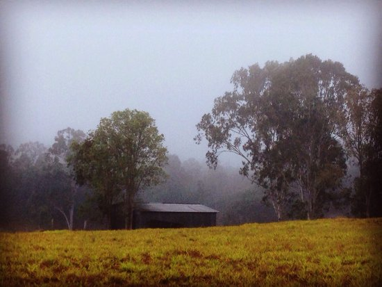 Atherton, Australia: Early morning views from our cottage.