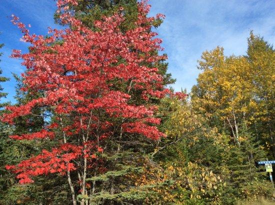 Val Morin, Canadá: L'automne dans le parc du Val David.