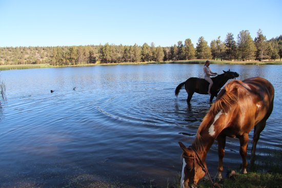 Long Hollow Guest Ranch: Where guests and horses cool off.