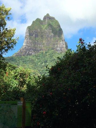 Belvedere Lookout: photo0.jpg