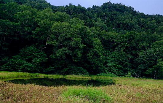 Tsurugaike Pond