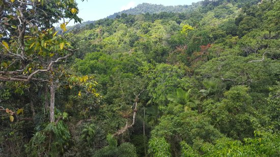 Daintree Discovery Centre: Magnificent view of the forest from the top of the canopy