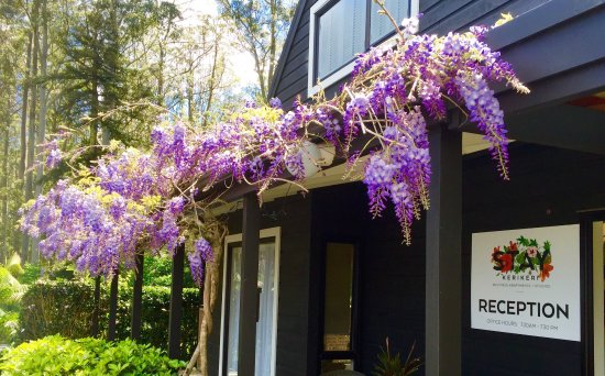 Kerikeri, نيوزيلندا: Hysteria with our Wysteria