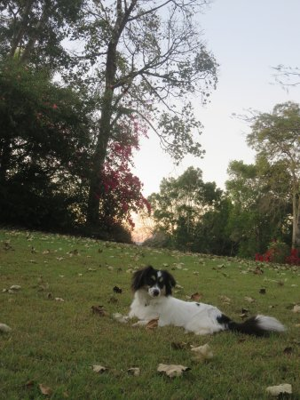 Cooroy, Australia: Pet friendly country escapes